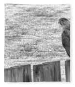 Red Tailed Hawk  Fleece Blanket