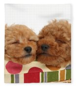 Red Toy Poodle Puppies Fleece Blanket