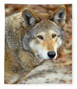 Red Wolf Portrait Fleece Blanket