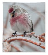 Redpoll Shy Pose Fleece Blanket