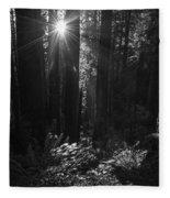 Redwood Sunburst Monochrome Fleece Blanket