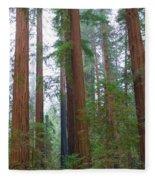Redwood Trees Fleece Blanket