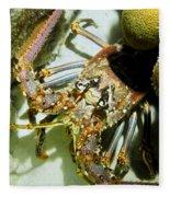 Reef Lobster Close Up Spotlight Fleece Blanket