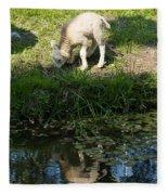 Reflected Cute Little Lamb Fleece Blanket