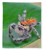 Regal Jumping Spider Fleece Blanket
