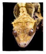 Reptile Close Up On Black Fleece Blanket