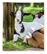 Resting Goats Fleece Blanket