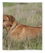 Rhodesian Ridgeback Dog Fleece Blanket