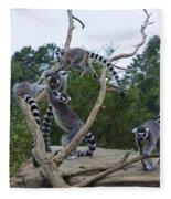 Ring Tailed Lemurs Playing Fleece Blanket