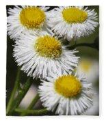 Robin's Plantain Wildflowers - Erigeron Pulchellus Fleece Blanket