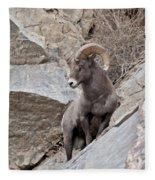 Rocky Mountain Big Horn Sheep Ram Fleece Blanket