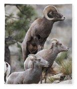 Rocky Mountain Big Horns Fleece Blanket