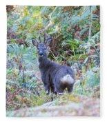 Roe Buck In Woodland Fleece Blanket