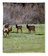 Roosevelt Elk Fleece Blanket