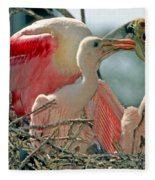 Roseate Spoonbill Feeding Young At Nest Fleece Blanket