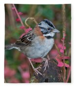 Rufous-collared Sparrow Fleece Blanket