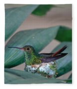 Rufous-tailed Hummingbird On Nest Fleece Blanket