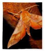 Rusty Sphinx Moth Fleece Blanket