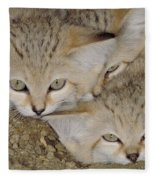 Sand Cat Felis Margarita Fleece Blanket