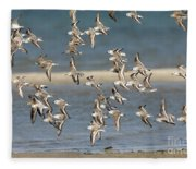 Sanderlings And Dunlins In Flight Fleece Blanket