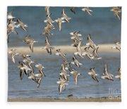 Sanderlings And Dunlins In Flight Fleece Blanket