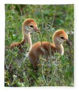 Sandhill Chicks Fleece Blanket