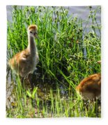 Sandhill Crane Chicks  Fleece Blanket