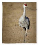 Sandhill Crane In The Spotlight Fleece Blanket