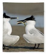 Sandwich Tern Offering Fish Fleece Blanket