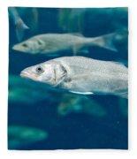Sardines Fleece Blanket