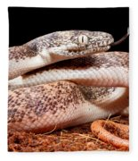 Savu Python In Defensive Posture Fleece Blanket