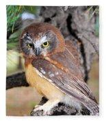 Saw-whet Owl In Conifers Fleece Blanket