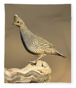 Scaled Quail Callipepla Squamata Fleece Blanket
