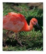 Scarlet Ibis Hybrid Fleece Blanket