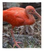 Scarlet Ibis One Legged Pose Fleece Blanket
