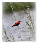 Scarlet Tanager - Coastal - Migration Fleece Blanket