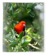 Scarlet Tanager Fleece Blanket