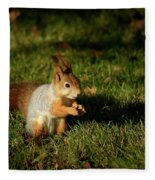 Sciurus Vulgaris In Evening Light Fleece Blanket