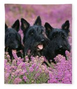Scottish Terrier Dogs Fleece Blanket