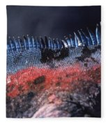 Sea Iguanas On Santiago And Floreanas Fleece Blanket