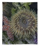 Sea Life Fleece Blanket