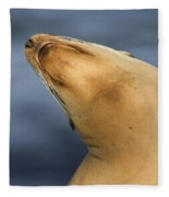 Sea Lion Stretch Fleece Blanket