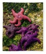 Sea Stars Fleece Blanket