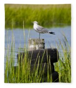 Seagull At Weeks Landing Fleece Blanket