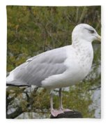 Seagull Outlook Fleece Blanket