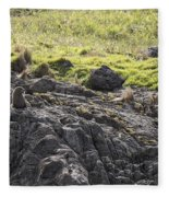 Seal - Montague Island - Austrlalia Fleece Blanket