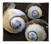 Seashells Spectacular No 23 Fleece Blanket