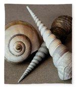 Seashells Spectacular No 24 Fleece Blanket