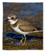 Semipalmated Plover Fleece Blanket