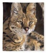Serval Portrait Wildlife Rescue Fleece Blanket